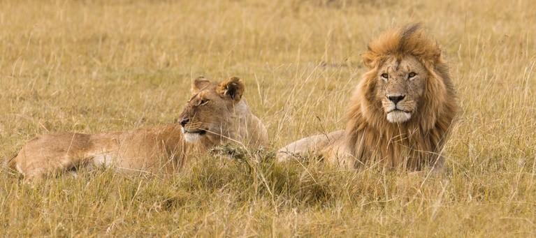 Совместимость льва с другими знаками