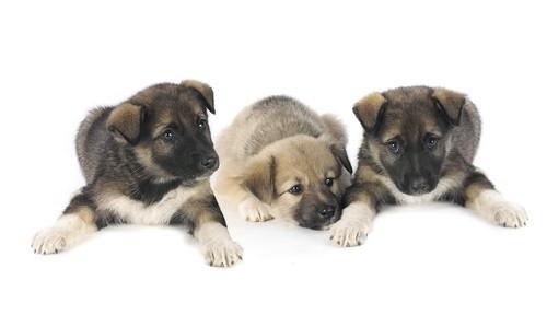 Собака и другие знаки зодиака