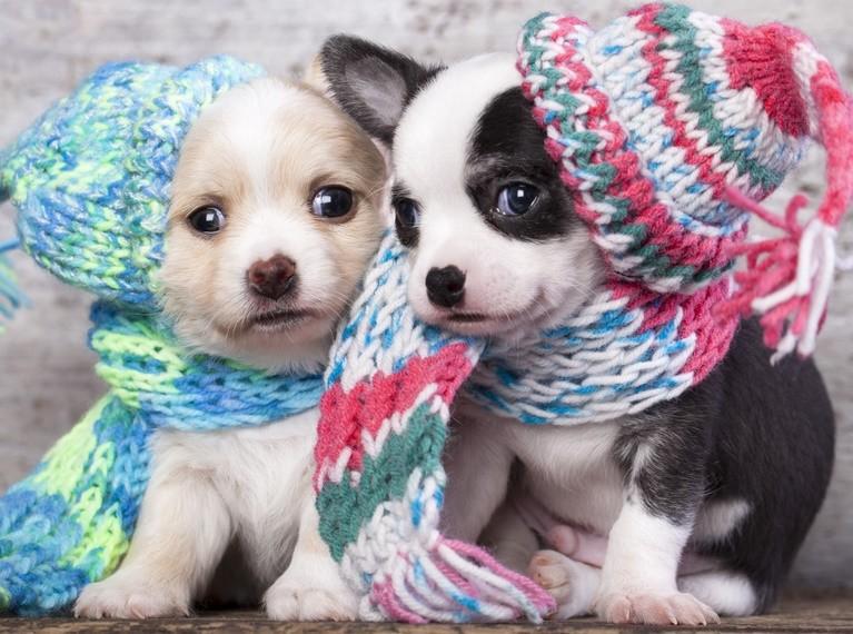 Вязание спицами на зиму теплых вещей