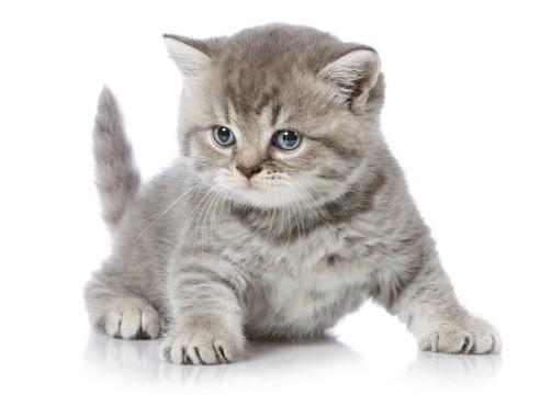 Почему я хочу кошку