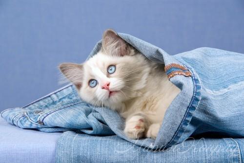 Как лучше сделать джинсы своими руками