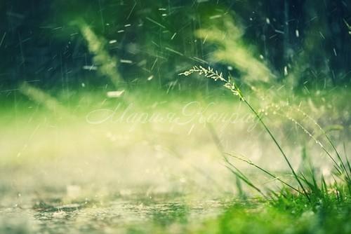Красота в дождь