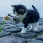 Как ухаживать за кошками в домашних условиях